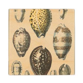 Uniquely Shaped Seashells Wood Coaster