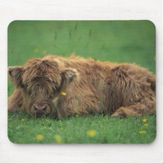 United Kingdom, Scotland. Highland calf Mouse Mat