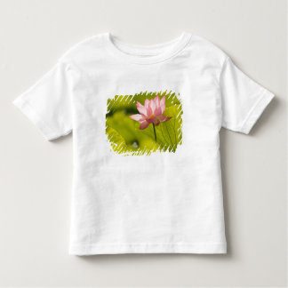 United States, DC, Washington, Kenilworth 2 Toddler T-Shirt
