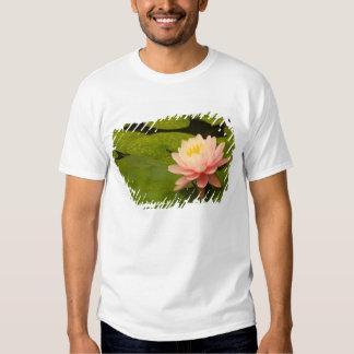 United States, Maryland, Westminster, Union Shirt