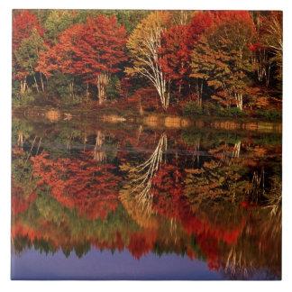 United States, Michigan, Upper Peninsula. Fall Large Square Tile