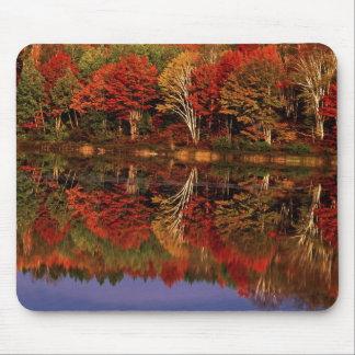 United States, Michigan, Upper Peninsula. Fall Mouse Mat
