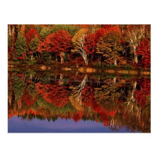 United States, Michigan, Upper Peninsula. Fall Postcard