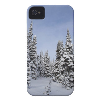 United States, Washington, snow covered trees iPhone 4 Case-Mate Case