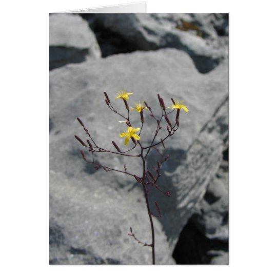 Unknown flowers in the Burren, Ireland Card