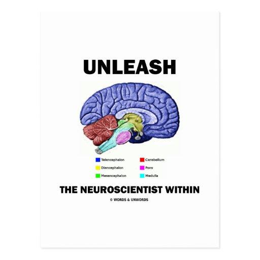 Unleash The Neuroscientist Within (Brain Anatomy) Postcard