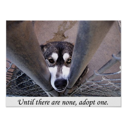 Until there are none, adopt one (watercolor) poster
