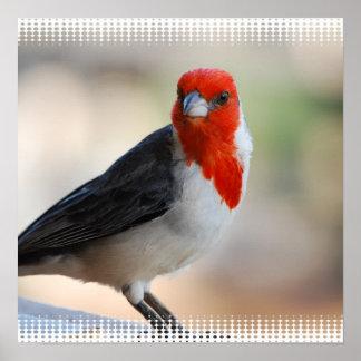 Unusual Cardinal Poster