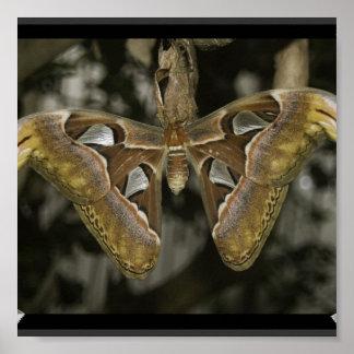 Unusual Moth Poster