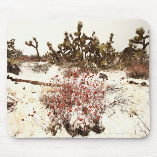 Unusual snow storm on the Joshua trees( Yucca Mousepads