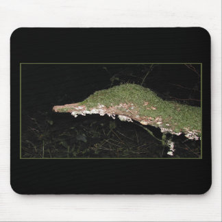 Unusual Vegetation in the Woods. Mousepads