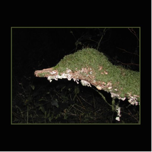 Unusual Vegetation in the Woods. Photo Cutouts