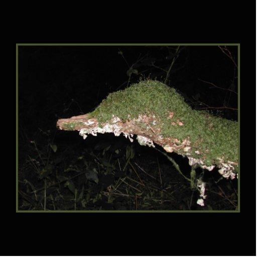 Unusual Vegetation in the Woods. Photo Sculptures