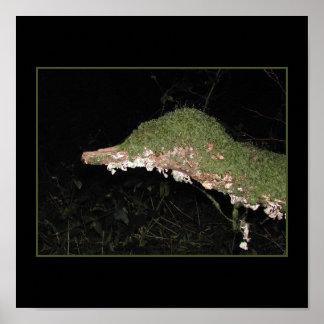 Unusual Vegetation in the Woods. Print