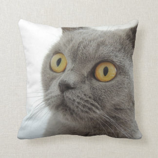 Up-Close British Shorthair Cat Throw Cushion
