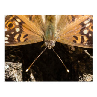 Up close orange butterfly post card