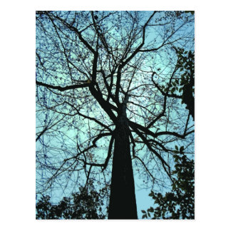 Up the Tree Postcard