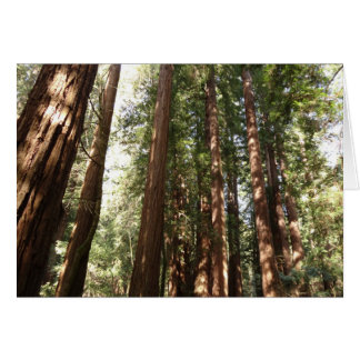 Up to Redwoods II at Muir Woods National Monument Card