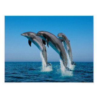 Up Up Up Dolphins Poster