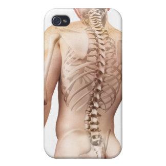 Upper Body Bones 2 Cover For iPhone 4