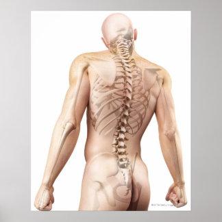 Upper Body Bones 2 Poster