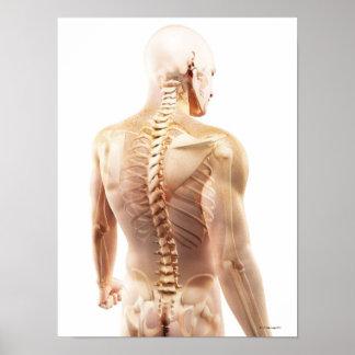 Upper Body Bones Posters