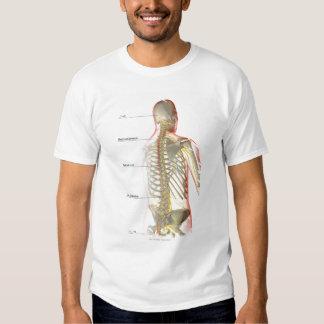 Upper Body Nerve Supply Tee Shirt