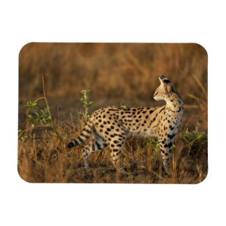 Upper Mara, Masai Mara Game Reserve, Kenya, Vinyl Magnets