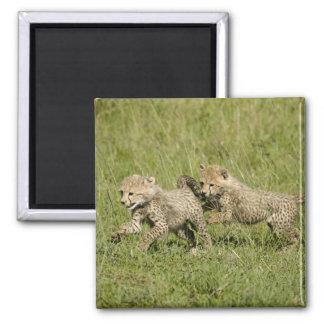 Upper Mara, Masai Mara Game Reserve, Magnet