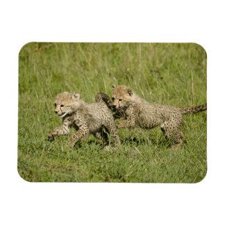 Upper Mara, Masai Mara Game Reserve, Rectangular Photo Magnet