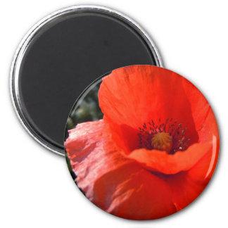 Upright Red Poppy Fridge Magnet