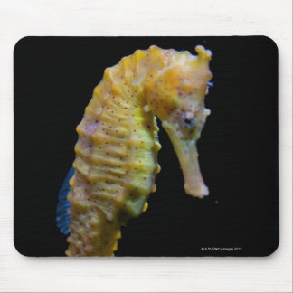 upright swimmerequine shapeprehensile taillong mouse pad