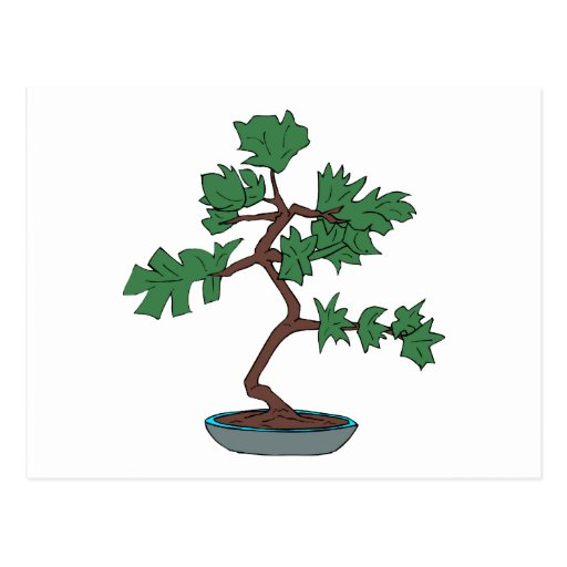 Upright young bonsai graphic postcards
