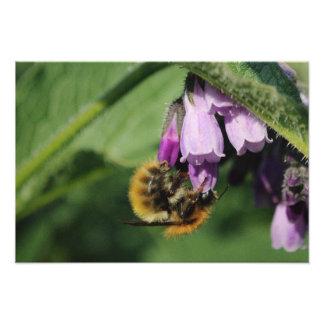 Upside Down Bee Photo