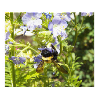 Upside Down Bumble Bee Art Photo