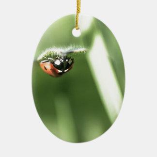 Upside down Ladybird Ceramic Oval Decoration
