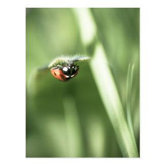 Upside down Ladybird Postcard