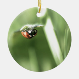 Upside down Ladybird Round Ceramic Decoration