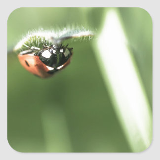 Upside down Ladybird Square Sticker