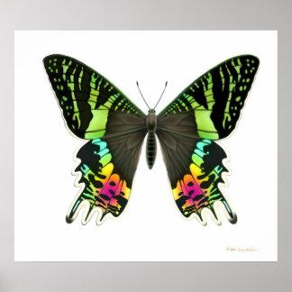 Urania Sunset Moth Poster