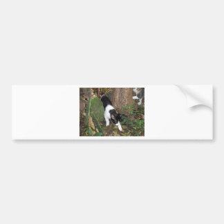 Urban Jungle Cats Bumper Sticker