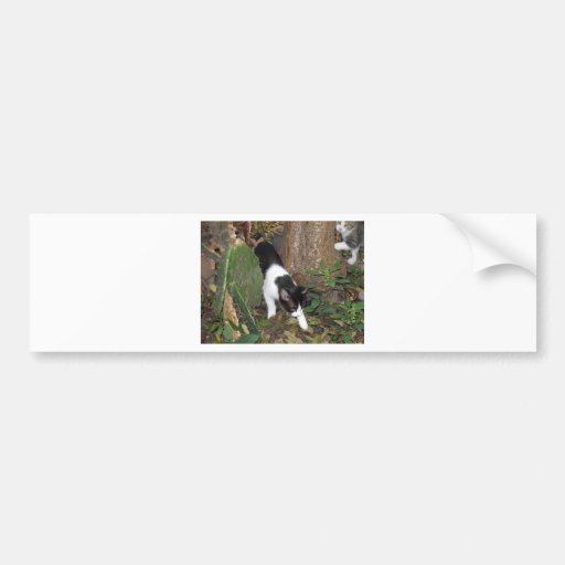 Urban Jungle Cats Bumper Stickers