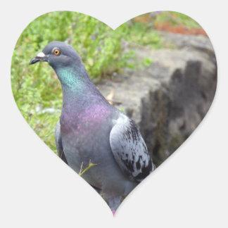 Urban Pigeon Heart Sticker