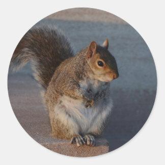 Urban Squirrel. Classic Round Sticker