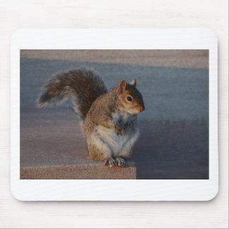 Urban Squirrel. Mousemat