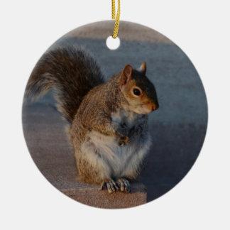 Urban Squirrel. Round Ceramic Decoration