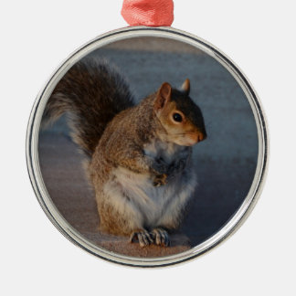 Urban Squirrel. Silver-Colored Round Decoration