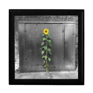 Urban Sunflower Large Square Gift Box