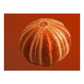 Urchin - Customized Print