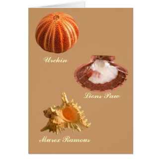 Urchin, Lions Paw, Murex Ramous Greeting Card